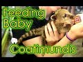 NJ Exotics episode 6: Feeding Baby Coatis and Caring for Kevin