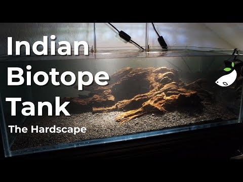 Scaping The Dirted Indian Biotope Tank - Part 1