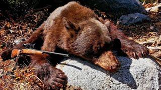 Bear Hunting 2016 - California - 7mm mag - Black Bear - Close Quarters Tracking