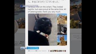 Японские коты примерили подарок из Зеленоградска