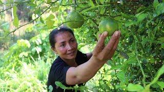 Finding food meet sweet lemon fruit for eat - Natural sweet lemon eating delicious #63
