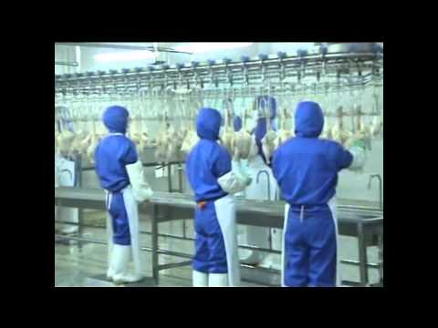 Poultry processing line working