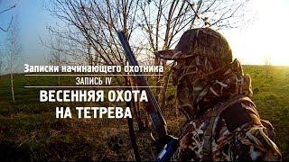 Охота на тетеревов весной видео