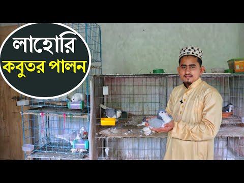 মাদ্রাসা পড়ুয়া ছেলের লাভজনক লাহোরি কবুতর খামার।Lahore Pigeon Farming Comilla