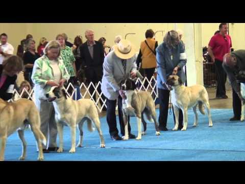 Silver Bay Kennel Club Dog Show 2-27-16
