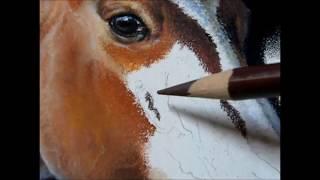 Quarter Horse Pastel Demonstration by Roby Baer PSA