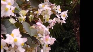 niagaras falls museum flowers