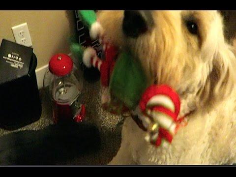 ELF ON THE SHELF dog attack!