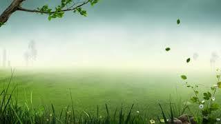 ดนตรีเพื่อสมาธิ2 (ผ่อนคลาย บำบัดความเครียด) Meditation music