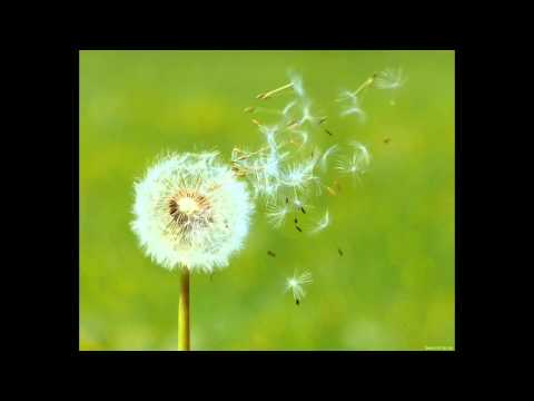 Children song (Dandelion)- composition by A^O