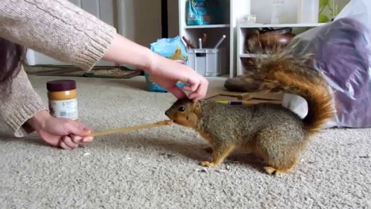petting a wild squirrel youtube