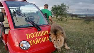 Лев МАРСЕЛЬ большой кот ! Папа , ПОЧЕШИ ПЯТОЧКУ !!!
