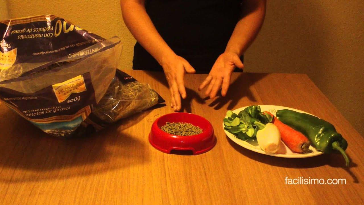 Alimentación de los conejos | facilisimo.com