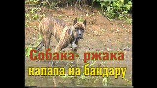 Прикол. Собака пытается утащить байдарку.