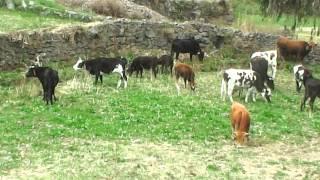 Herranza Fam. Baylon Villarroel Parte 2 (2015) Huanza