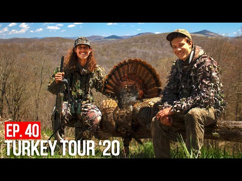 Do CARS SPOOK Turkeys??? - WEST VIRGINIA MOUNTAIN GOBBLER!