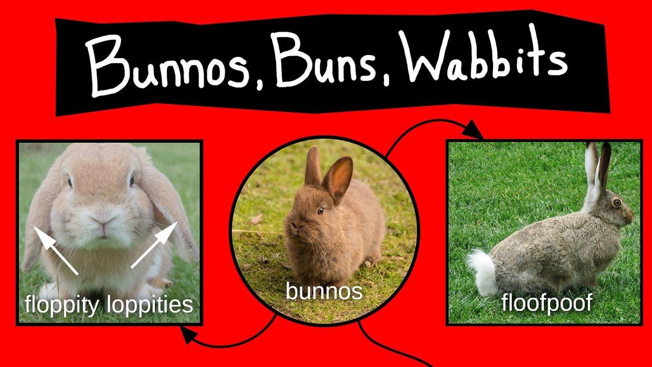 bunnos-buns-wabbits-internet-names-for-bunnies