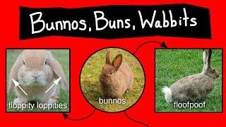 Bunnos, Buns, & Wabbits - Internet Names for Bunnies