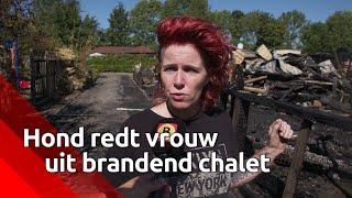 Hond redt vrouw uit brandend chalet op camping in Nieuw-Vossemeer: 'Ze hoorde de rookmelder niet'