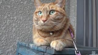 散歩中に座り込んだカリン。電線に集まったカラスの動きを眺めています...