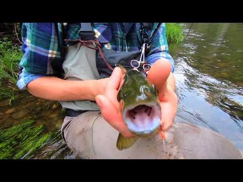 Big River Trout Fly Fishing - Nov 2017