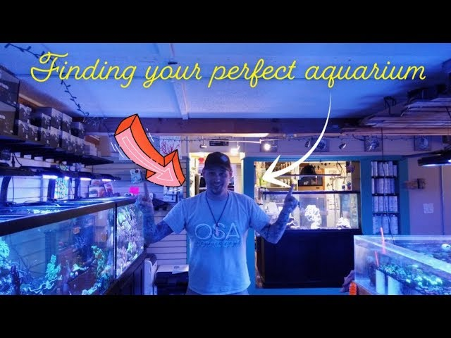 Finding Your Perfect Aquarium with the OSA team!