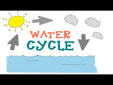 Water Cycle : The 3 phases Explained : Water Cycle Animation for Kids