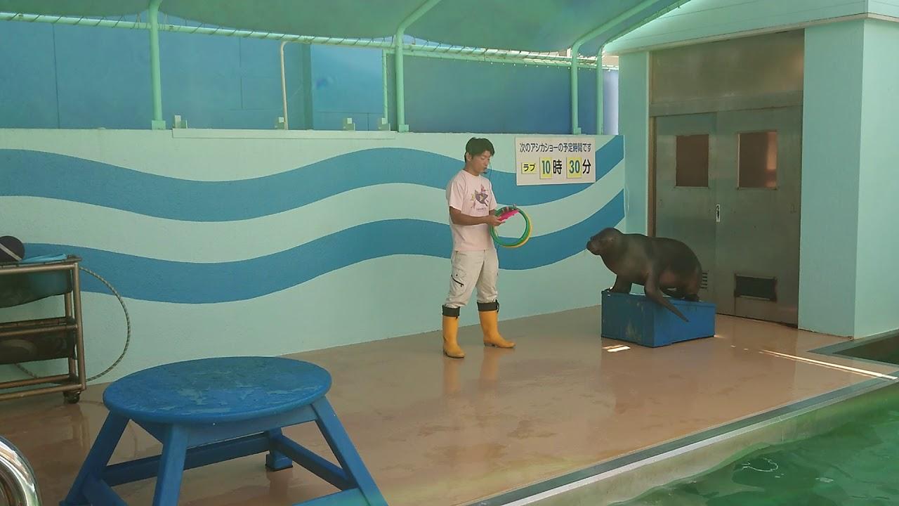 竹島水族館 オタリアショー