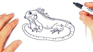How to draw a Iguana Step by Step | Iguana Drawing Lesson