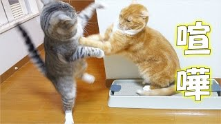 爪とぎを使ってもらう為に少量のマタタビを使用すると、猫達はテンショ...