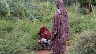 The menstrual holes of Tana River - VIDEO