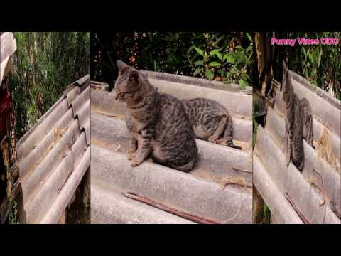 Funny Cats Compilation 2017 New Video funny pranks try not to laugh challenge
