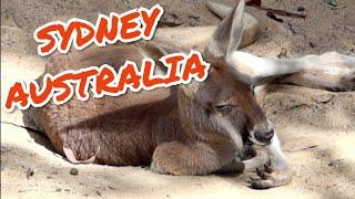#1193 SYDNEY AUSTRALIA TRAVEL Hanging w/ Kangaroos, Koalas, Sky Safari & TARONGA Zoo (11/16/19)