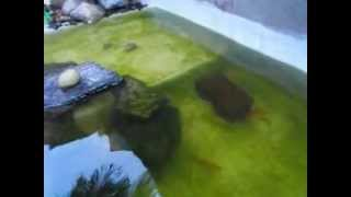 como tirar a agua verde (água limpa)resultado final