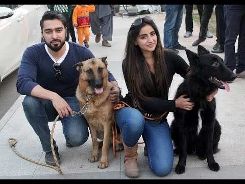 All Breed Dog Show in Islamabad Pakistan 2016