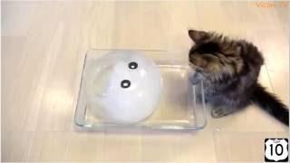 Приколы с котами - ТОПовая подборка! под музыку