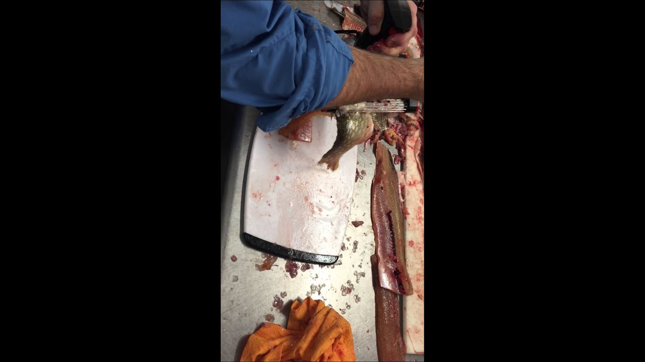 Skinzit on a northern youtube for Skinzit fish skinner