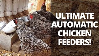 Automatic Chicken Feeders | Save Time Raising Chickens