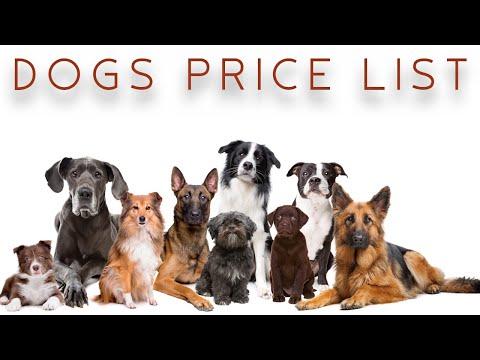 நாய்களின் விலை | DOGS PRICE LIST | Storyboard