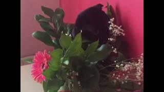 видео Что делать, если кошка ест цветы
