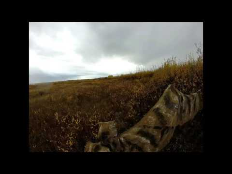 Agassiz Outfitters - Moose 2016 Nick's Manitoba Moose Hunt  MPEG2