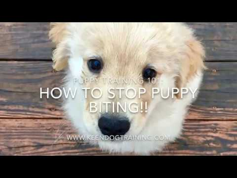 how-to-stop-puppy-biting