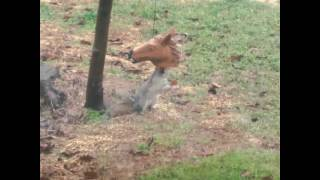 Horse Head Squirrel Feeder!