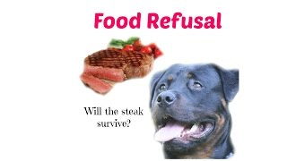 Dog Vs Steak Rottweiler Food Refusal Training