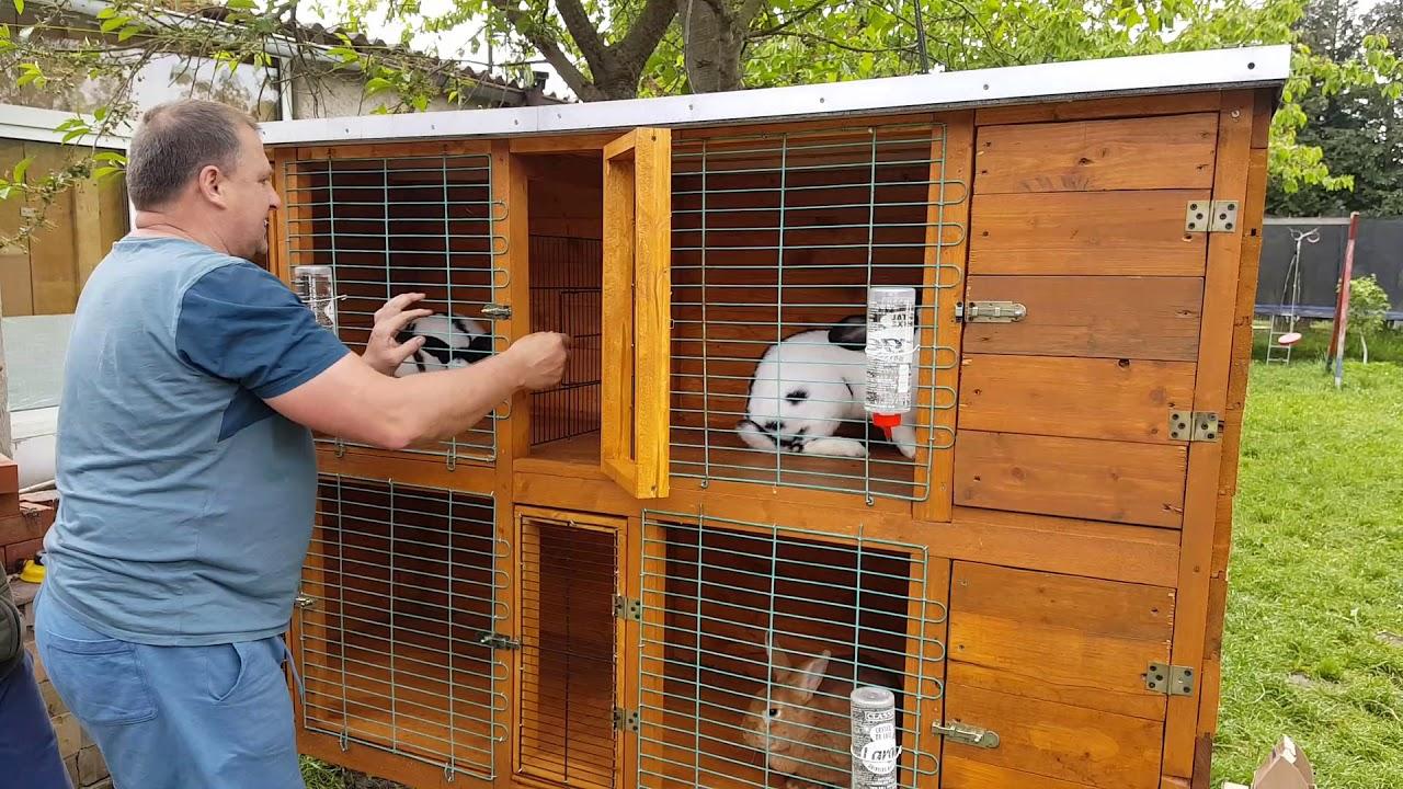 """Моя Дача""""Кролики""""Германия..."""