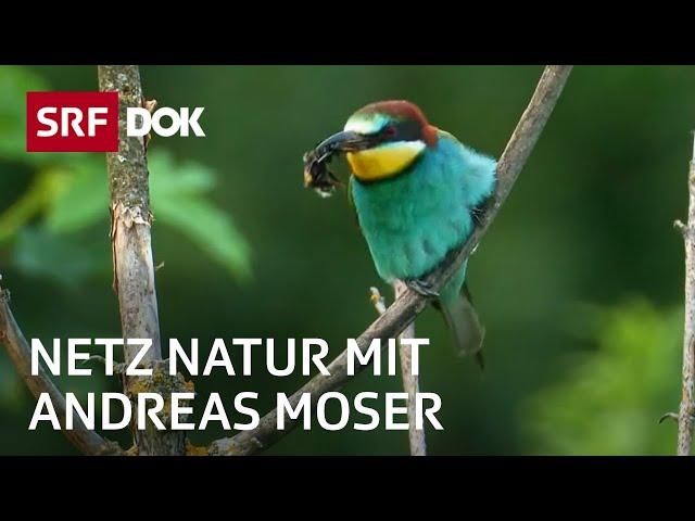 Artenvielfalt der Schweiz | Der Sinn der Vielfalt | NETZ NATUR mit Andreas Moser | Doku | SRF DOK