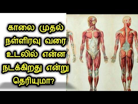 காலை முதல் நள்ளிரவு வரை உடலில் என்ன நடக்கிறது என்று தெரியுமா? Functioning of human body in Tamil