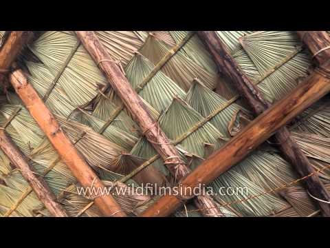 Roof of a Konyak morung made from Luk leaf
