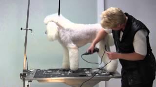 Poodle Lamb Trim - Legs - Rear Legs
