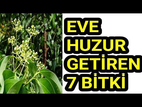 Evinize Huzur Getirecek Bitkiler